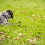 Top 10 der beliebtesten Hunderassen