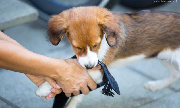 Hund aufnehmen: Auf was vorher achten?